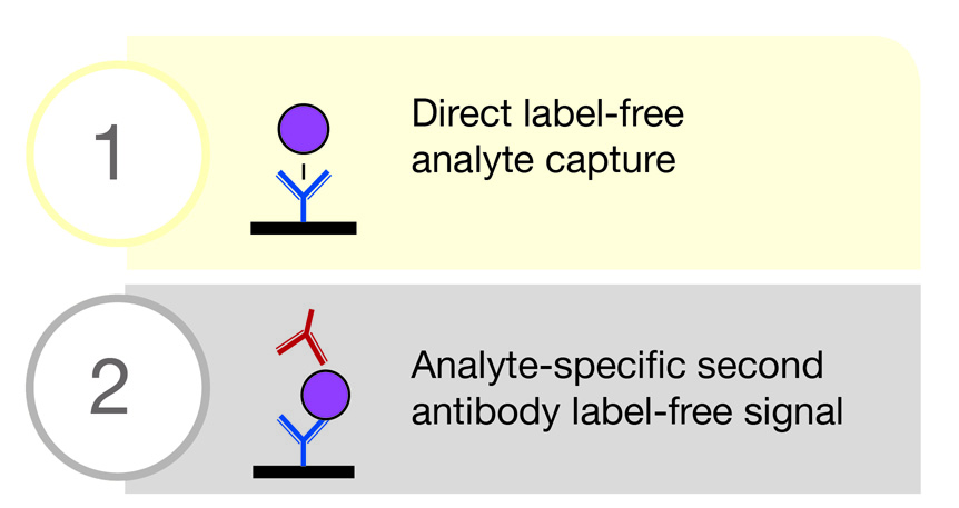 LamdaGen's LightPath S4 performs precise label-free real-time protein monitoring and analysis.